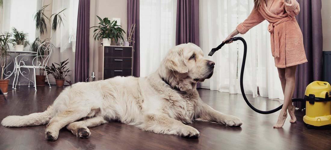 como-mantener-tu-casa-limpia-con-mascotas