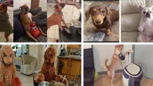 los-mejores-mannequinchallenge-de-perros