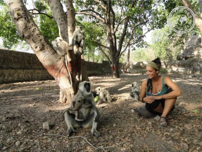 Con unos monos muy simpáticos en Rishikesh, India.