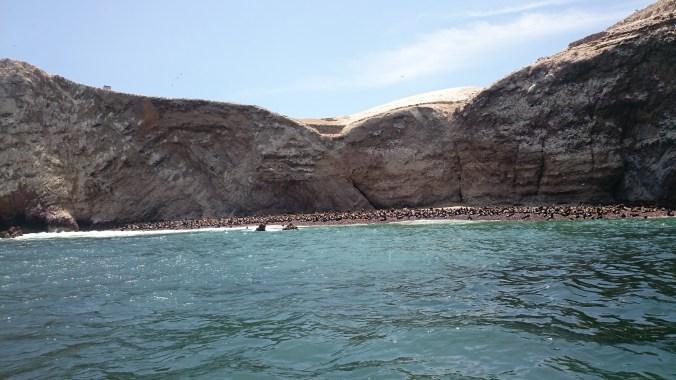 Familias de Lobos marinos.
