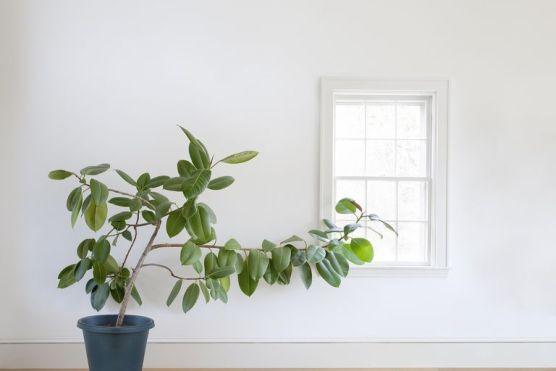 پودے ایک دوسرے کے ساتھ سرگوشی میں بات کرتے ہیں، ماہرین