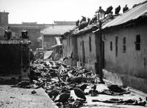 ১৯৪৬ সালে কলকাতায় সংঘটিত দাঙ্গা, মুসলিম বাঙালীই যার শিকার সবচেয়ে বেশি, শুঁকুনে খাচ্ছে মানুষের লাশ