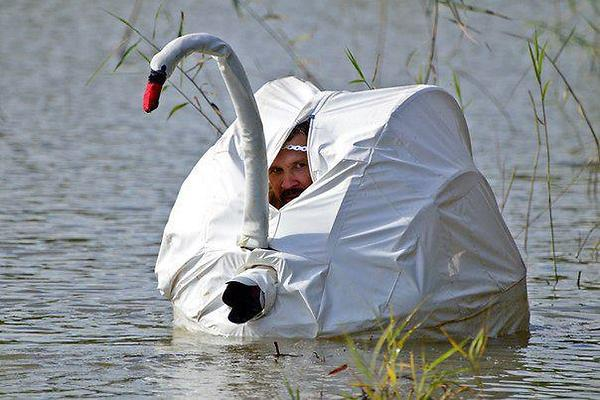 Este espião está bem disfarçado no cisne falso