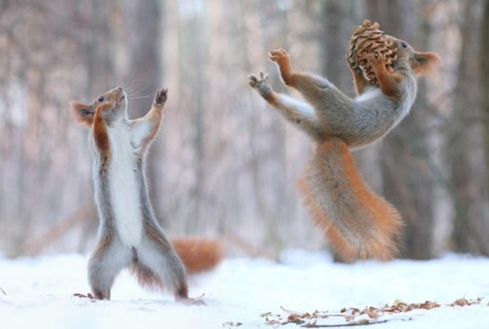 Esquilo Flutuando