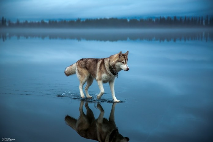 Cão Solitário