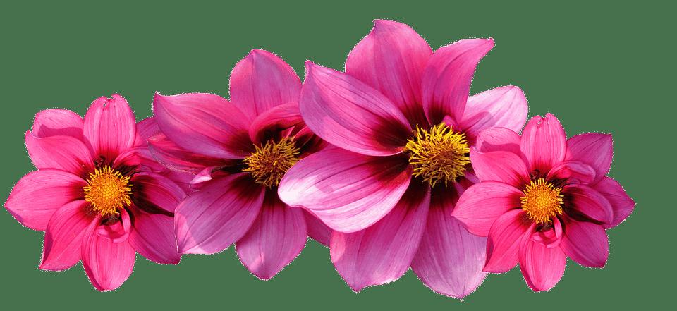 Flor Png Fundo Transparente