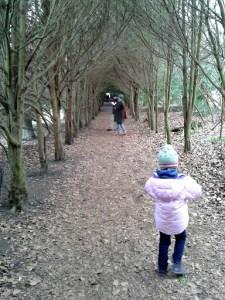 Polesden Lacey tree tunnel