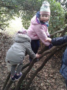 Polesden Lacey climbing trees