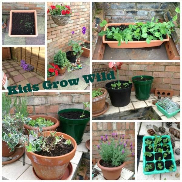 Kids Grow Wild