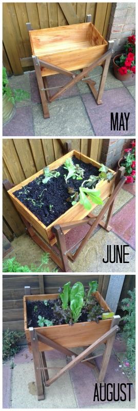 Vegetable Wine Box - Grow Your Own Crops in Pots