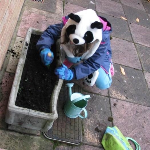 Panda preparing the soil for the miffy bulbs