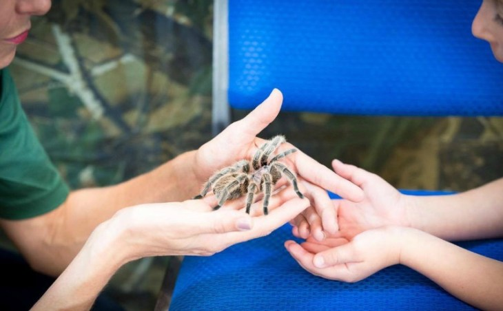 How to correctly handle a tarantula, something to think about when booking a reptile party