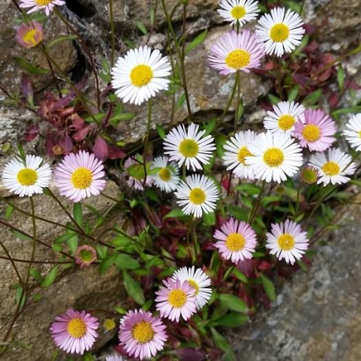 Loseley Park flowers