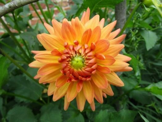 Lullingstone Castle World Garden flower 4