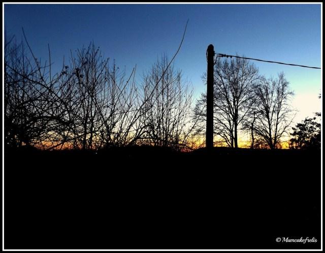 alba trame d'albero colori..... tra i rami di un albero spoglio