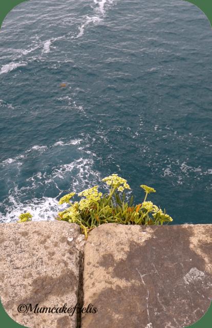 pianta cresciuta tra le pietre della chiesa di S. Pietro a Portovenere