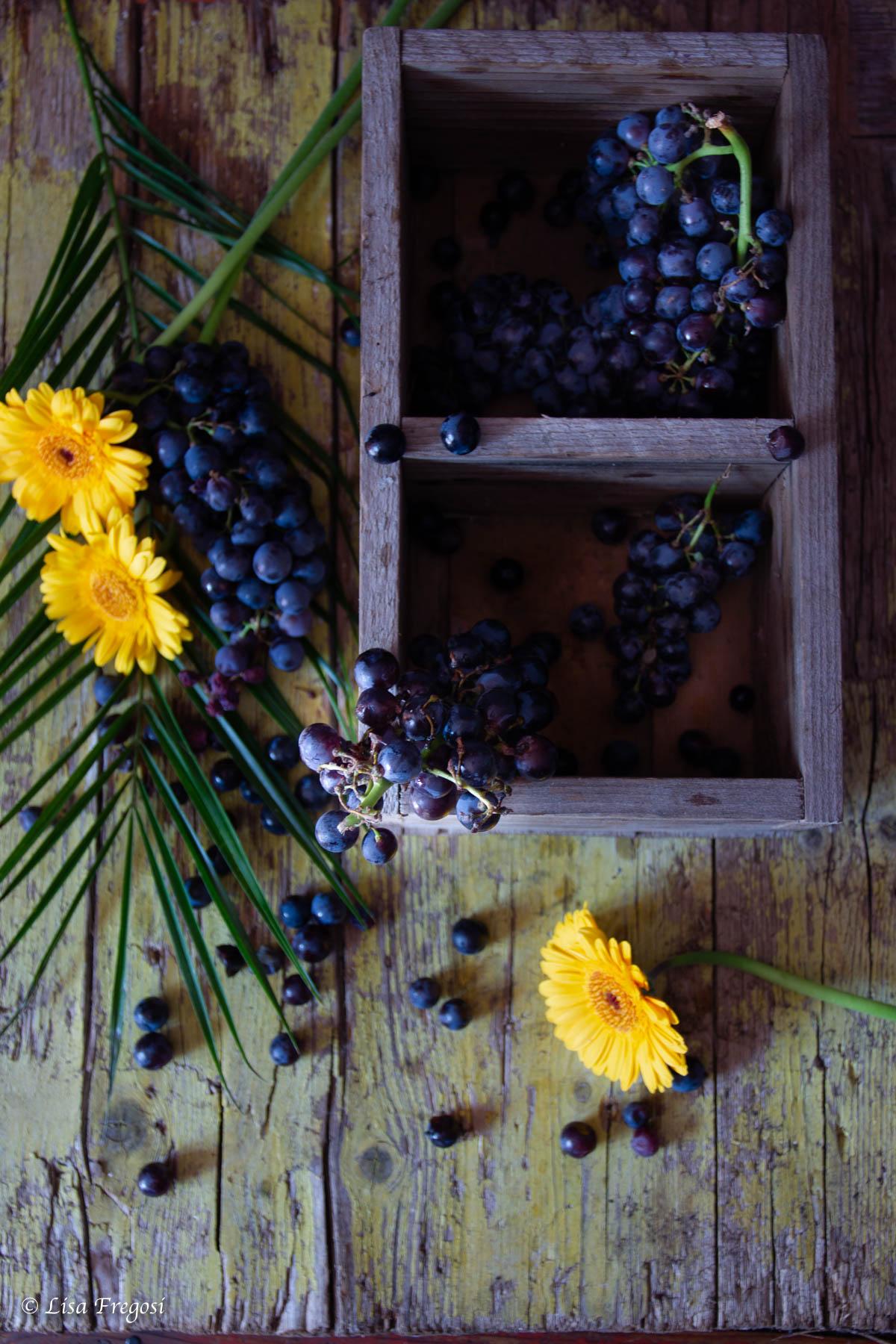uva canaiola