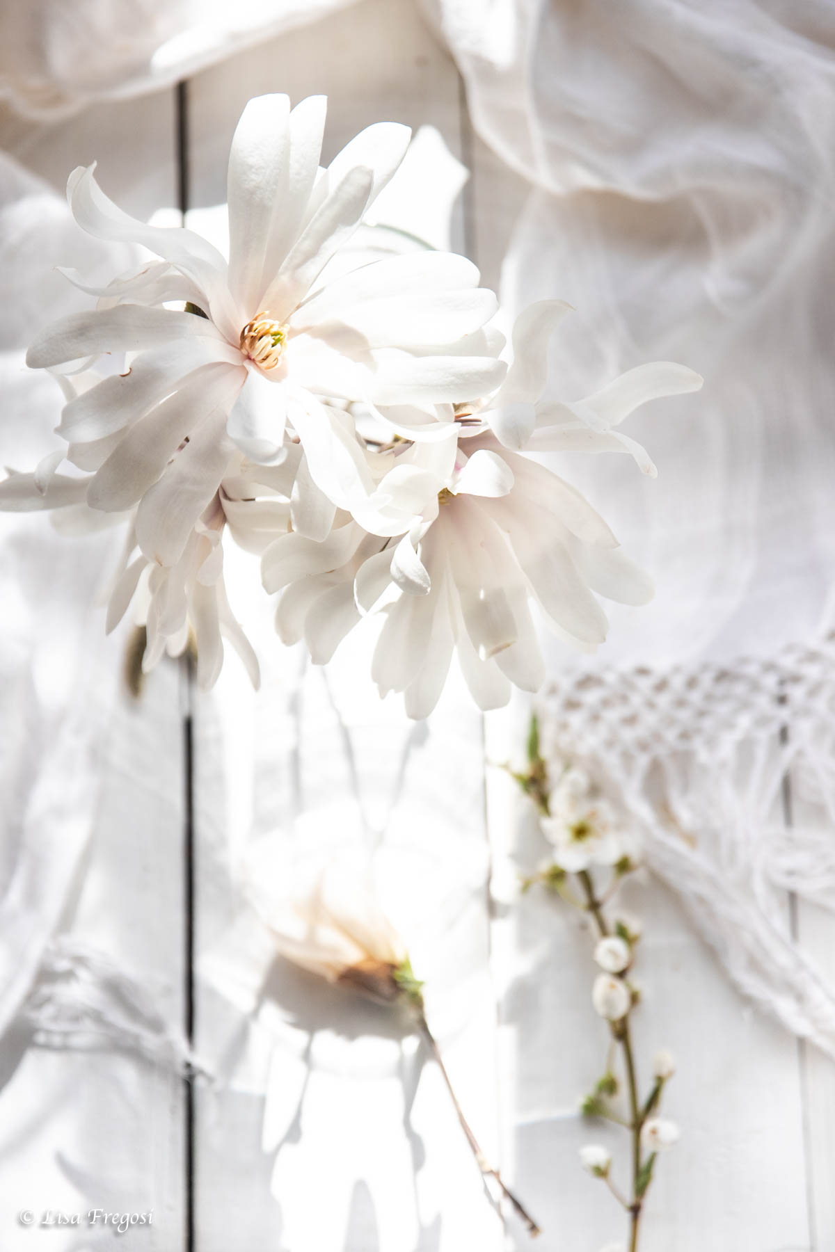 fiori-bianchi-total-white photography