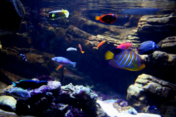 summer holidays at the London Aquarium