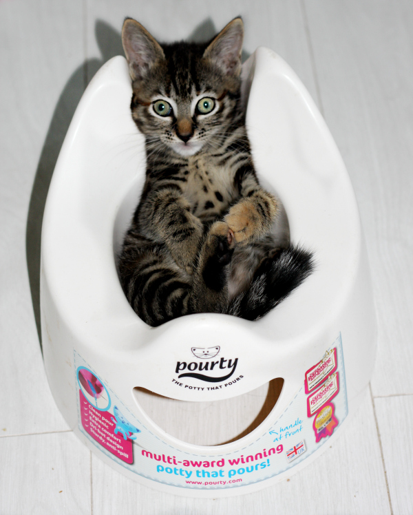 Cute kitten photo Betty on potty