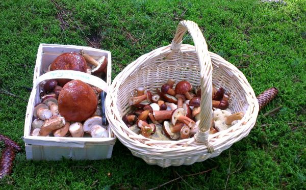 mushroom picking in Germany