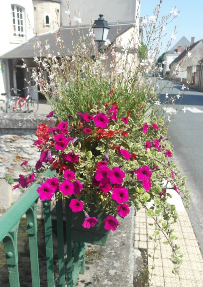Mezieres hanging baskets