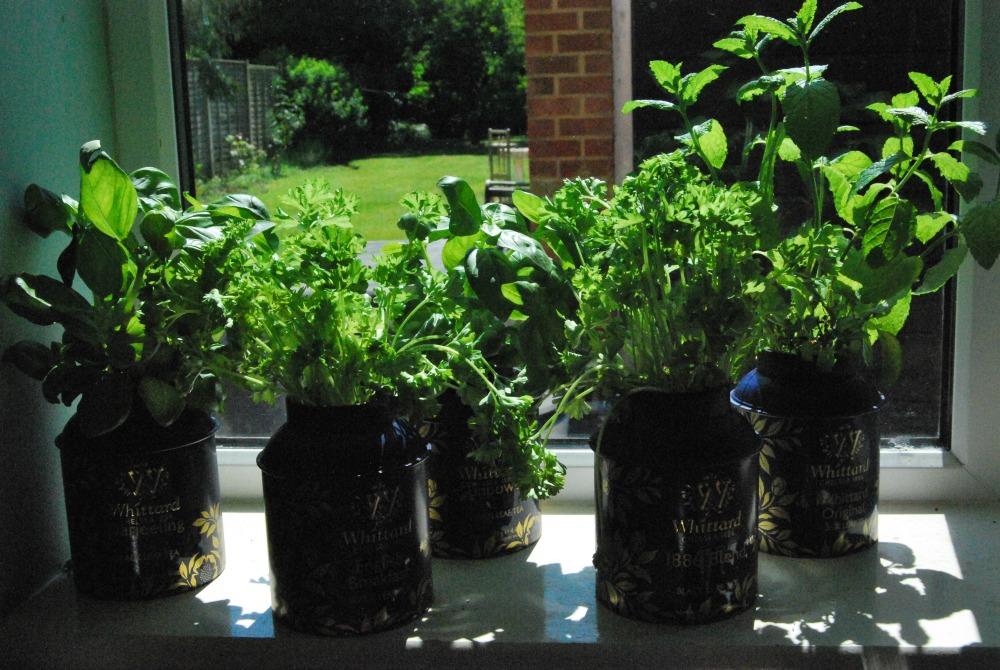 Herbs in tea caddy