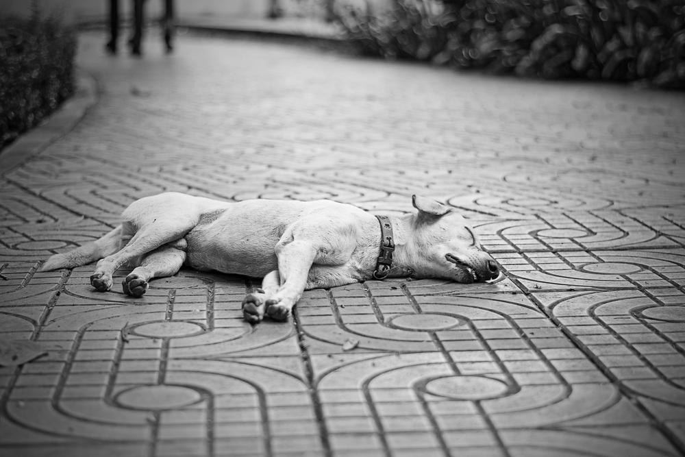 Sleep Or lack thereof