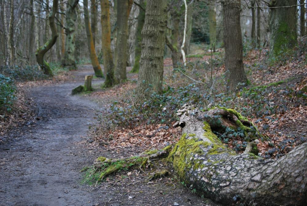 woodland walk Fleet Pond