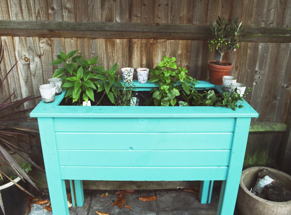 Planting a gin garden at home