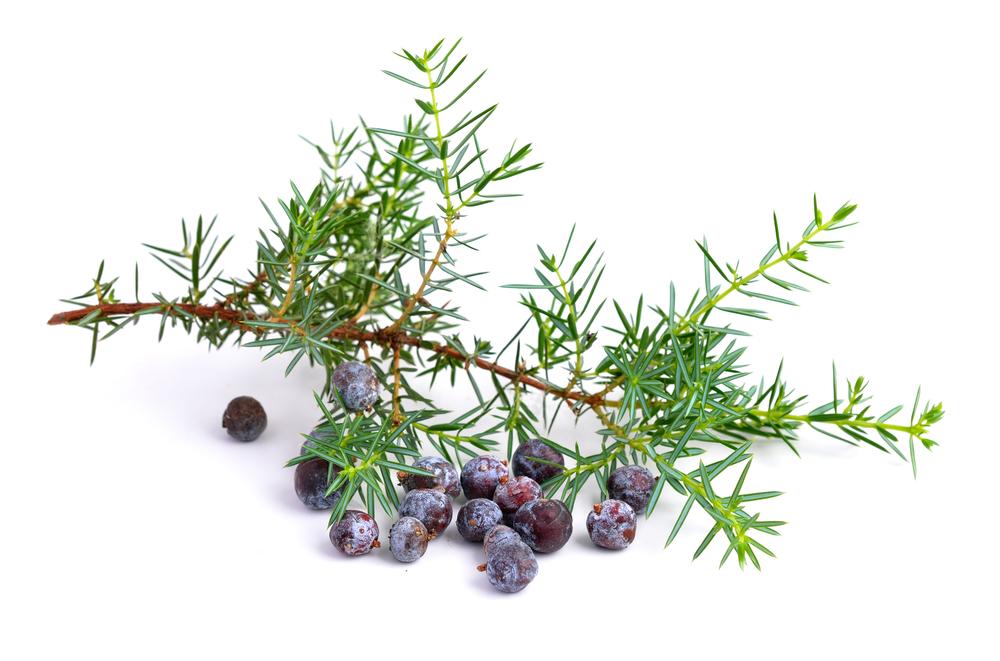 Juniper berries in gin