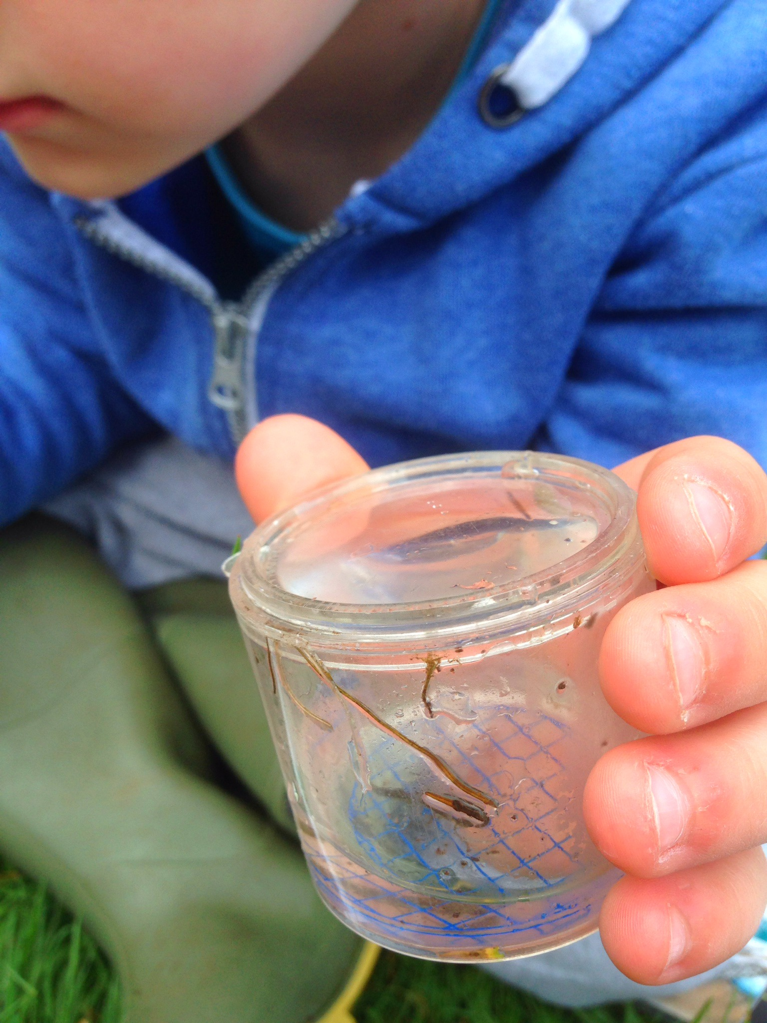 Pond Dipping #50things