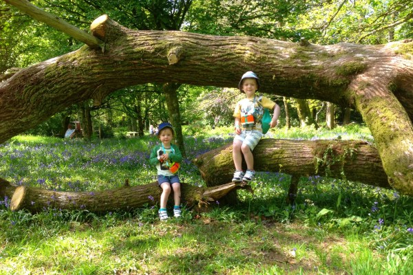 We're Going On A Bluebell Hunt