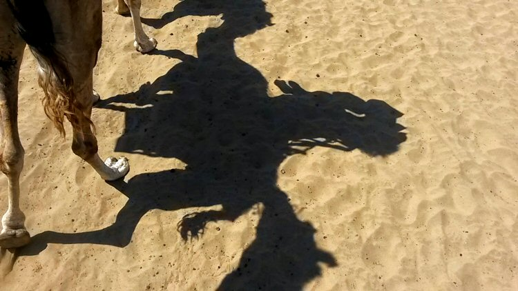 gran-canaria-maspalomas-camel-safari