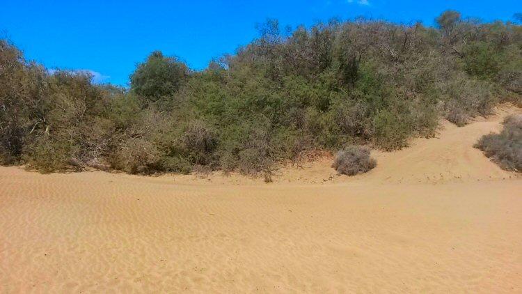 gran-canaria-maspalomas-dunes-view