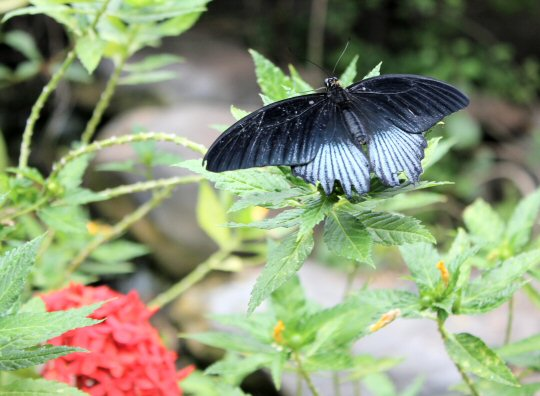 gran-canaria-palmitos-park-butterfly
