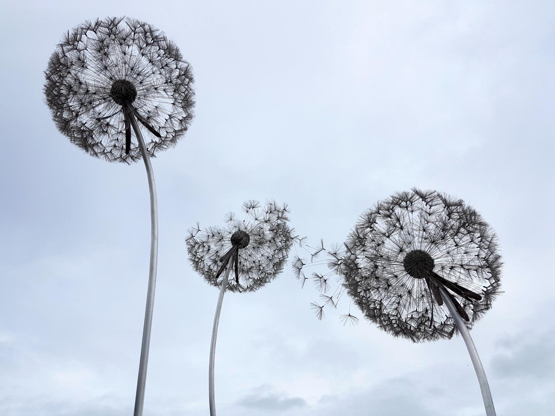 trentham-estate-gardens-fairy-dandelion2