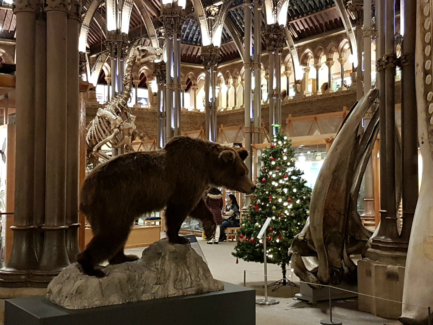 Brown bear by a whale jawbone and Christmas tree at the entrance to the Oxford University Museum of Natural History. Our Oxford University natural history museum day out