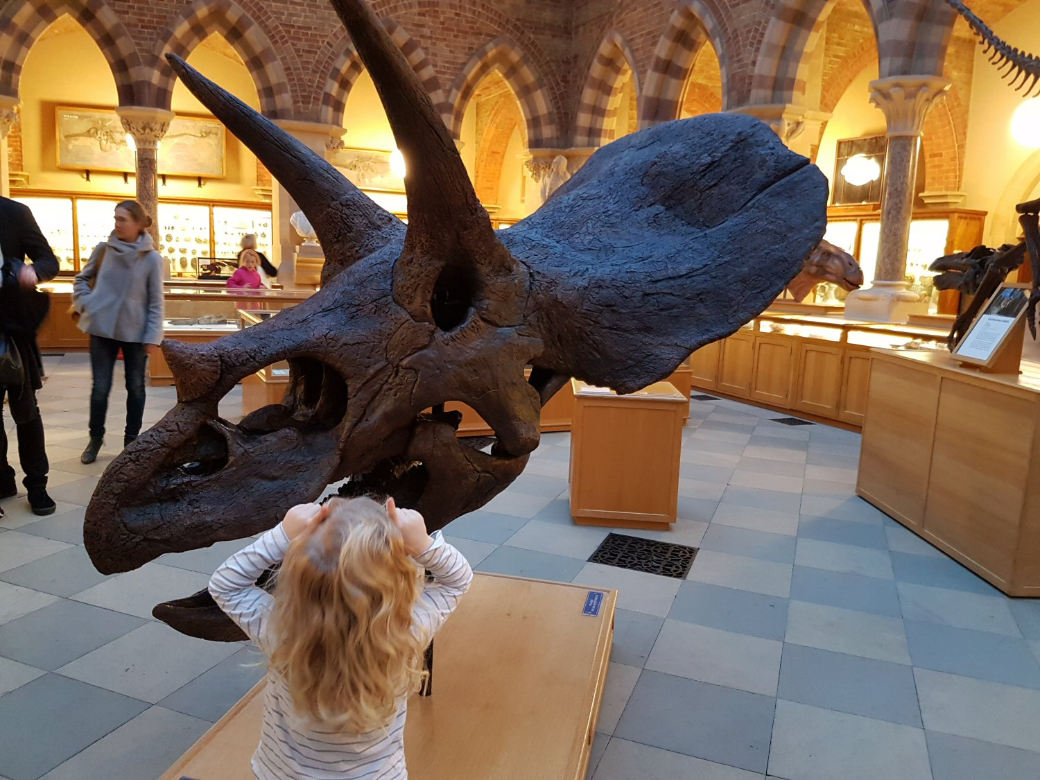 Triceratops head and small girl - one of the exhibits at Oxford University Museum of Natural History. Our Oxford University natural history museum day out