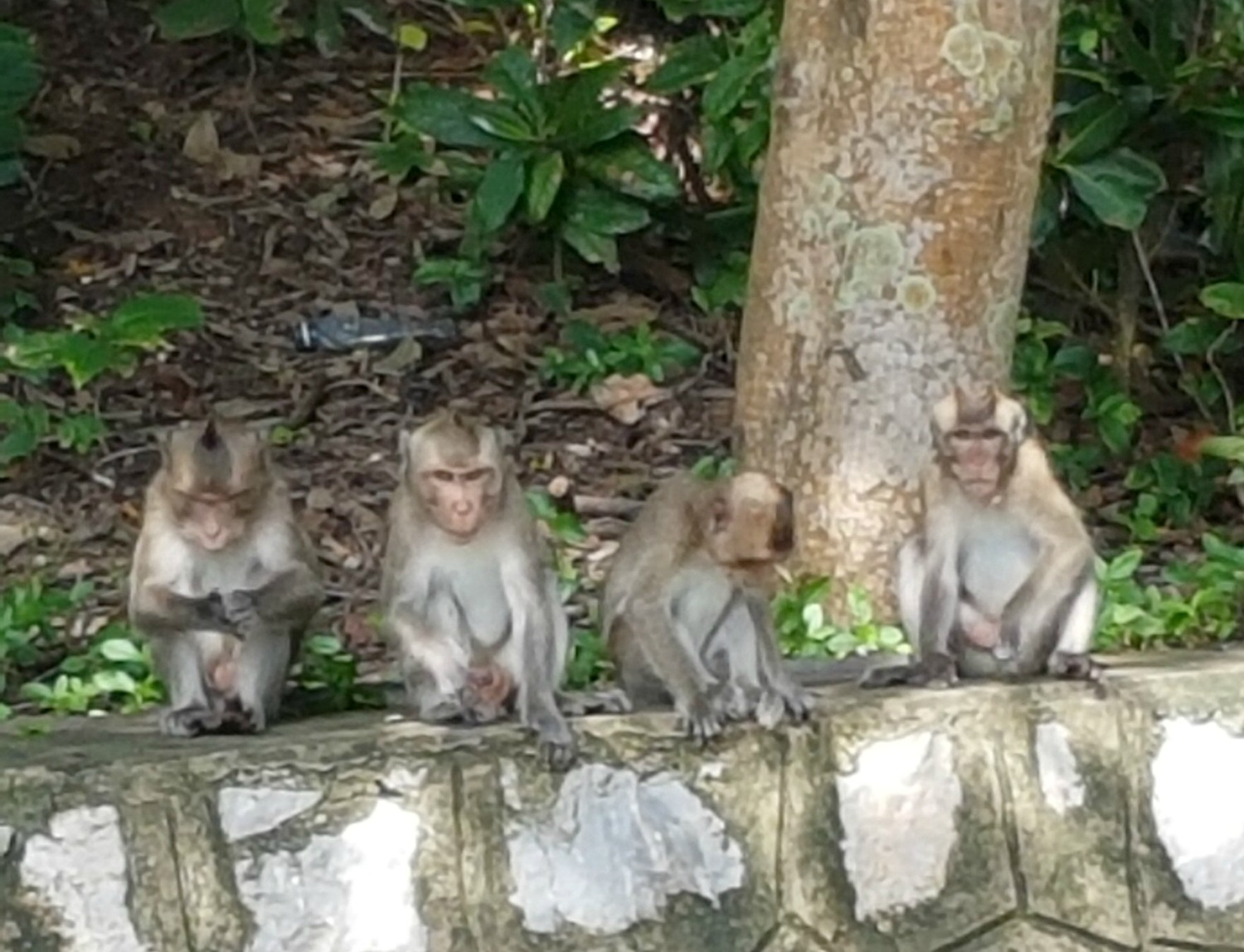 Monkeys by the roadside in Kep - 12 reasons to visit Cambodia with kids