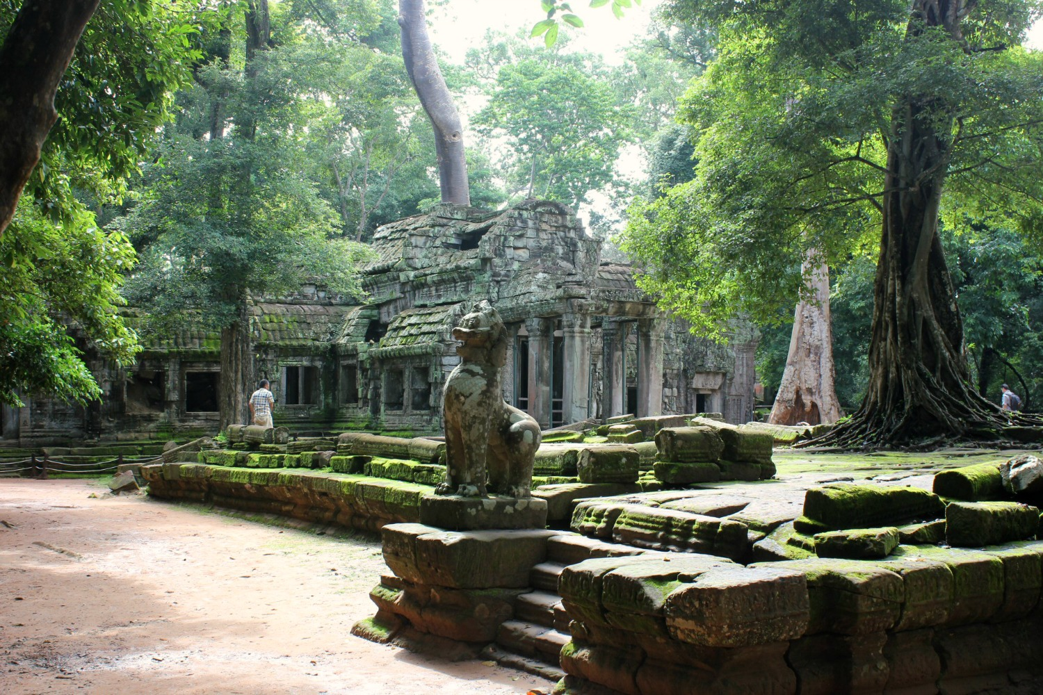 A view of Ta Prohm with the trees twined around it - 12 reasons to visit Cambodia with kids