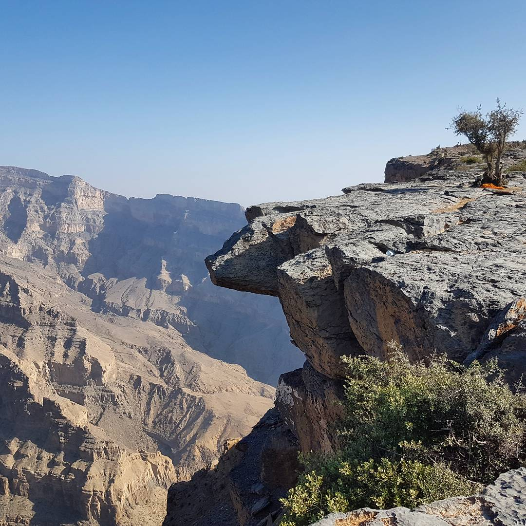A view of the canyon at Jebel Shams with a tree growing on the rock at the top of the mountain - my nine reasons to visit Oman with kids