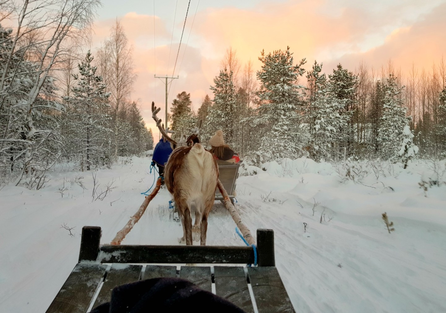 2eefd3fdda3 View of a reindeer pulling our sleigh with the pinky gold clouds of sunset  beyond the
