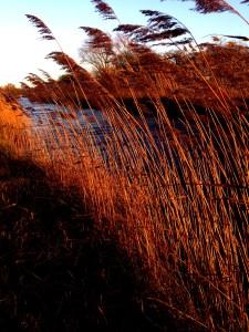 Wicken Fen, canal, mumof2