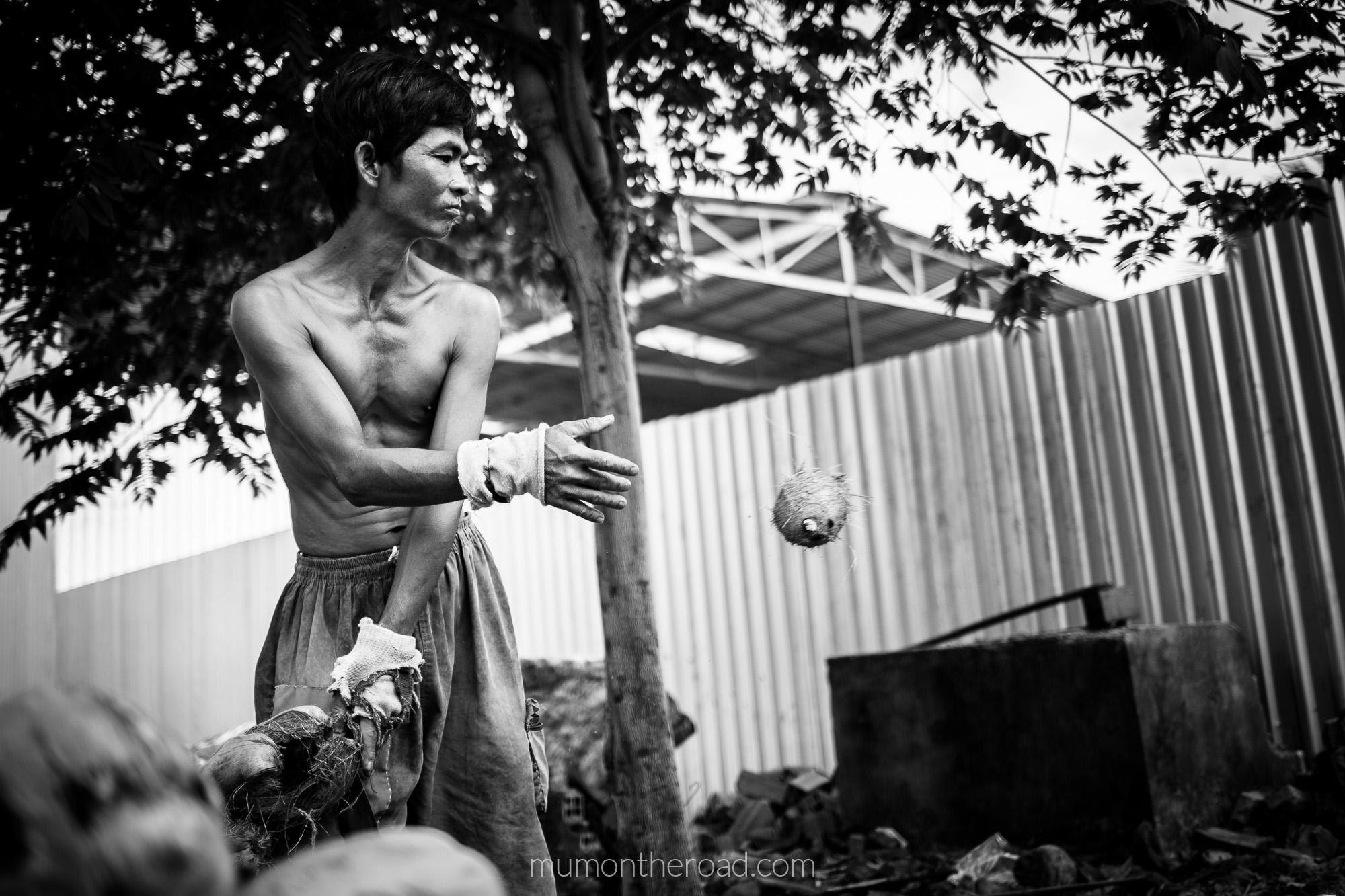 Un ouvrier d'une entreprise de transformation de noix de coco les ouvre une à une sur un pieux de métal 2