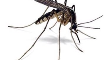 Easy Way To Kill Mosquitoes, Gnats And Horse Flies