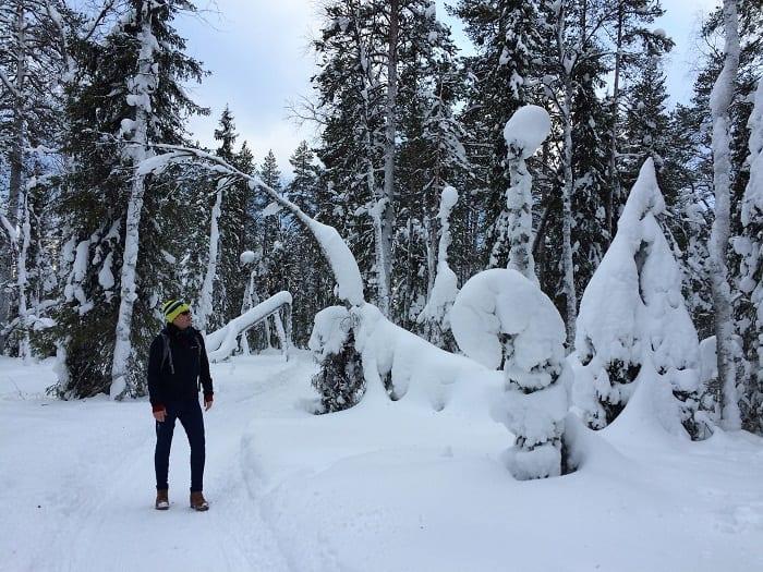 Snow on trees in Lapland