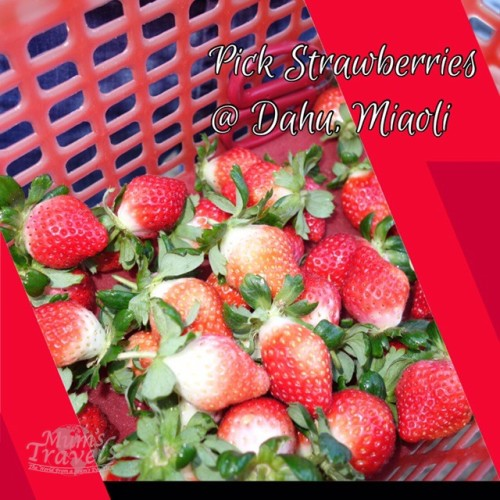 Pick your own strawberries @ Dahu