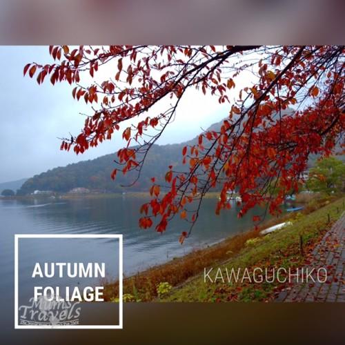 Kawaguchiko - along the banks of the lake