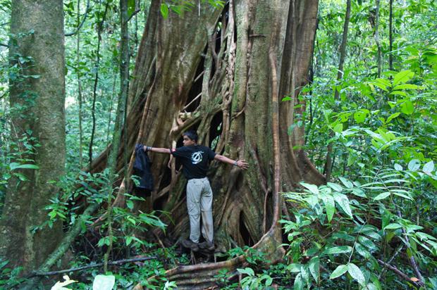 abrazando-un-árbol enorme en khao sok